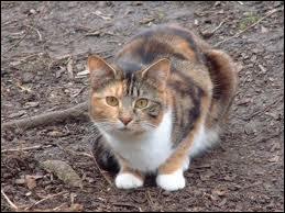 Quelle chatte était prête à mourir avec ses petits sur le chemin du tonnerre, quand Coeur de Feu et Plume grise la sauvent avec tout son clan ?
