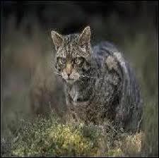 Avec qui Griffe de Tigre va attaquer le clan du Tonnerre ?