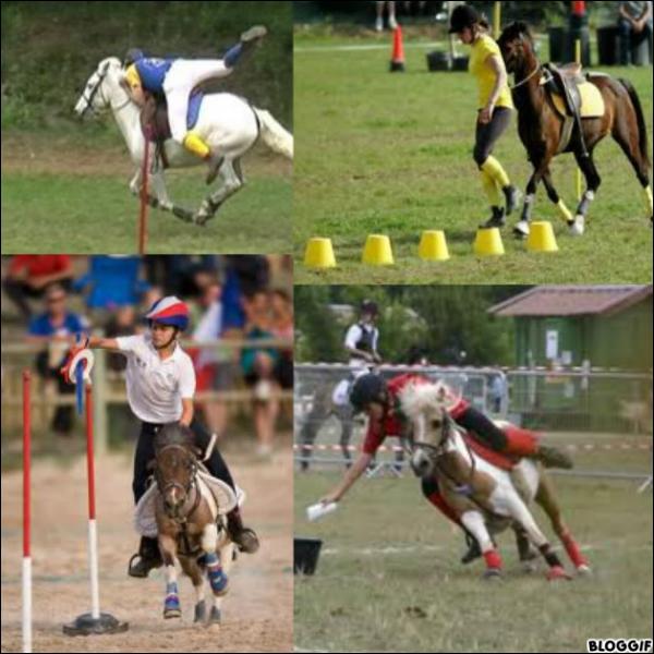 Quelle discipline pratiquent ces chevaux ?