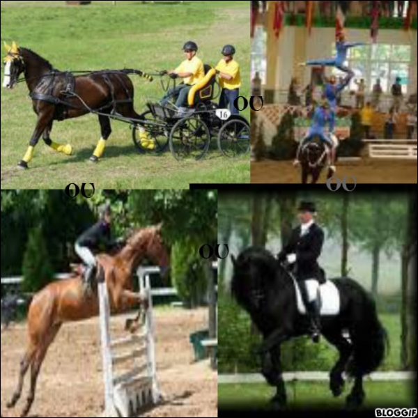 Quelle est la discipline qui consiste à exécuter des figures sur le dos du cheval ?