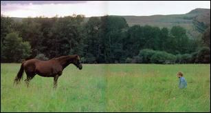 Comment s'appelle le cheval alezan qui a eu un accident dans 'L'homme qui murmurait à l'oreille des chevaux' ?