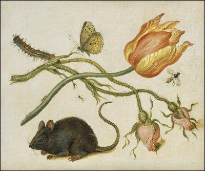 De qui est ce petit rat inoffensif ?