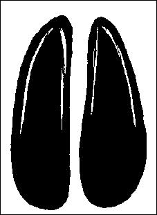 De la famille des bovidés, sa peau devenue cuir est appelé basane :