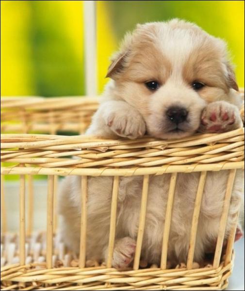 'Cette chienne vient d'avoir des petits. Ils dorment avec elle dans le panier qui se trouve dans notre grenier. ' Combien y a-t-il de déterminants dans cette phrase ?