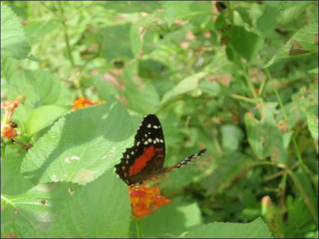 Qu'est-ce qui différencie un papillon de jour d'un papillon de nuit ?