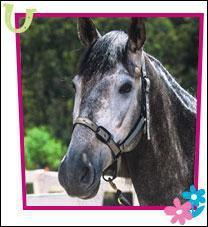 Comment s'appelle le cheval de la championne ?