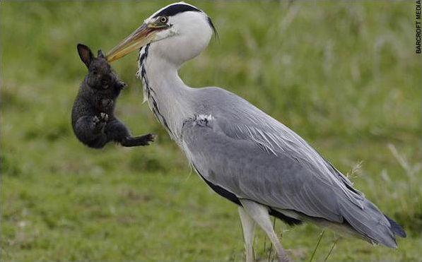 Les oiseaux de la rivière