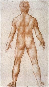 Qui a fait cette étude 'Homme nu vu de dos' ?