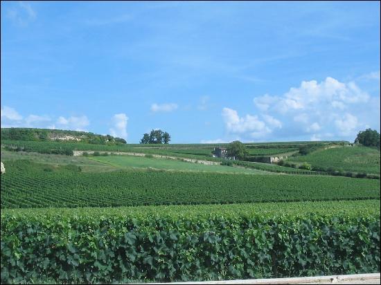 Le vin Château Angélus est un :