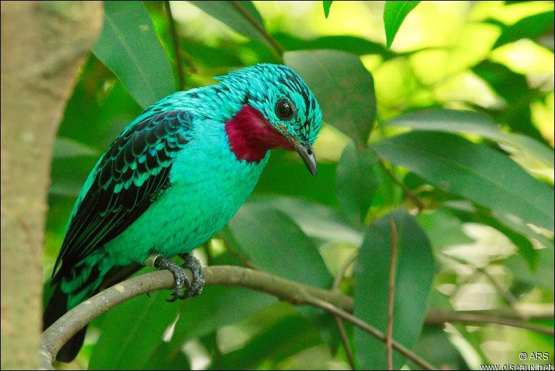 Quizz les oiseaux multicolores quiz oiseaux couleurs for Photo oiseau