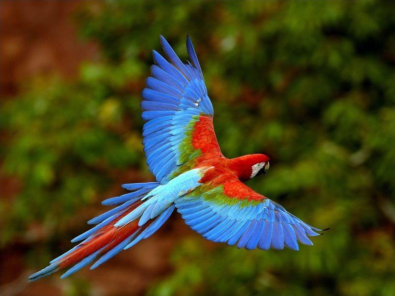 Quizz les oiseaux multicolores quiz oiseaux couleurs for Oiseau couleur