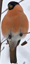 12 oiseaux à reconnaître