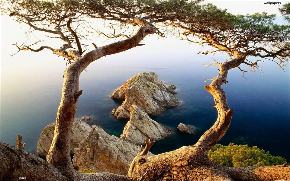 Nous sommes dans le midi de la France, que pouvons-nous trouver sur cet arbre ?