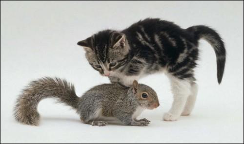 Quel écureuil est en train d'envahir la France ?