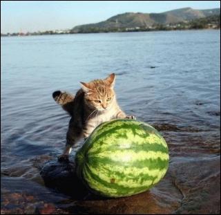 Quel fruit pousse le chat ?