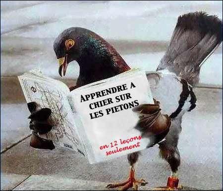 Que lit cet oiseau ?