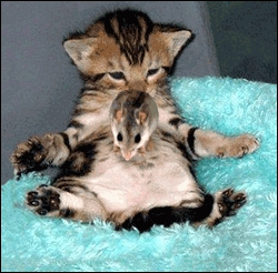 Quel animal est sur le ventre du chat ?