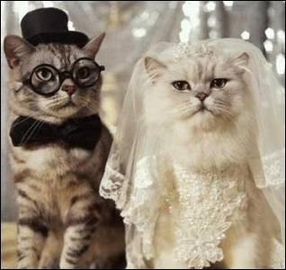 Qui sont ces deux animaux qui vont se marier ?