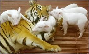Quels sont ces animaux ?