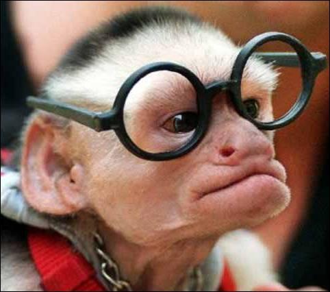 De quelle couleur sont ses lunettes ?