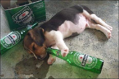 Que boit le chien ?