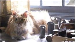 Katniss découvre dans les décombres de la ville, le chat de sa petite soeur. Comment s'appelle-t-il ?
