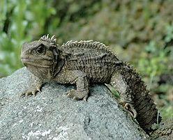 Les reptiles