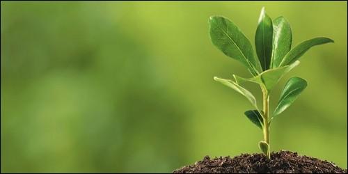 """Quel est le verbe pour le mot """"plant"""" ?"""
