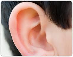 Les oreilles...