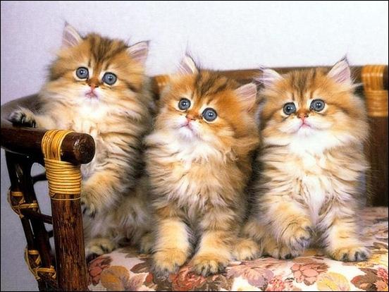Dans le film 'Les Aristochats', comment s'appellent les trois chatons de Duchesse ?