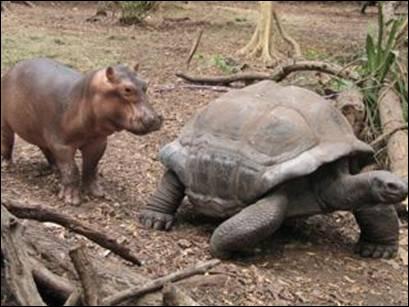 Quizz les animaux 2 quiz animaux - Jusqu a quel age peut on emprunter ...