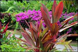 (Vous êtes sûr de vouloir continuer ? Ce quiz est nul ! ) ''Récemment, je disais à une amie adepte des plantes tropicales : ---------------------------- ! ''