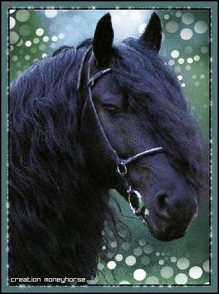 Dans la saison 3, Lisa craque pour un cheval sauvage, comment s'appelle-t-il ?