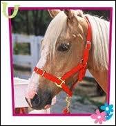Comment s'appelle son cheval ?