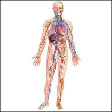 Quel vaisseau sanguin transporte le sang de toutes les parties du corps vers le cœur ?