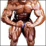 Le muscle sartorius est un muscle se situant au niveau...