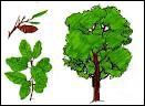 Pour fabriquer le liège, quelle partie du chêne-liège est exploitée ?
