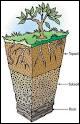 Quelle science s'intéresse à l'étude des sols ?