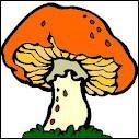 Quel nom porte la partie du champignon qui se trouve sous la terre ?