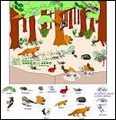 Comment s'appelle cette unité fondamentale qui est formée par l'association d'une communauté d'espèces vivantes et d'un environnement physique ?