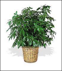 Quelle fille aime bien s'occuper de ses plantes vertes ?