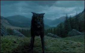 Qui est ce chien ?
