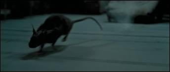 Cette personne s'est fait passer pour un rat, mais qui est-ce ?