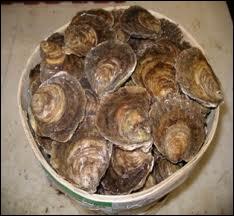 Quelles sont ces huîtres plates ?