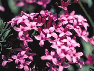 Cette fleur est aussi un joli prénom :