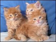 Rusty a rencontré quel chat sauvage lors de sa premiere escapade dans la fôret ?