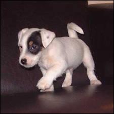 L'illustration du petit chien est à associer à ?