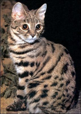 Qu'a fait Griffe de Tigre comme acte impardonnable ?