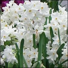 Ces jolies fleurs odorantes d'hiver sont des ?