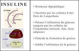 Certaines cellules des 'îlots de Langerhans' sécrètent l'insuline, savez-vous où se trouvent ces 'îlots' ?